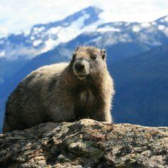 British Columbia photo 13