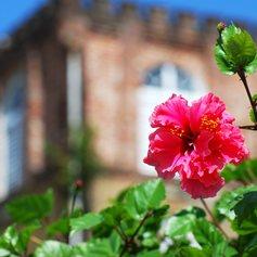 The tropical flourishing flower