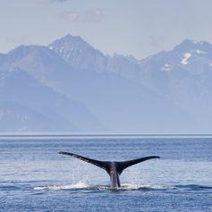 Alaska photo 4