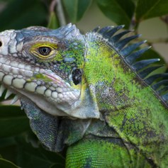 Meet the Incredible Animals that Inhabit St Barts