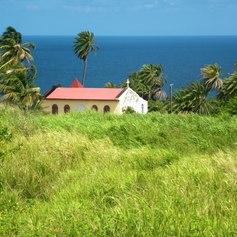 Sugar Cane Field with Church
