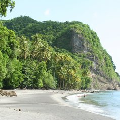Empty beach with wild forest close to