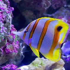 Great Barrier Reef photo 24