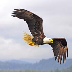 British Columbia photo 17