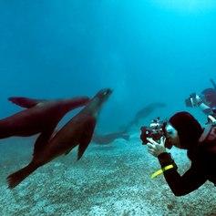 Galapagos Islands photo 13