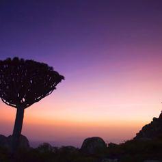 Socotra photo 29