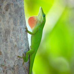 Visit a reptile haven