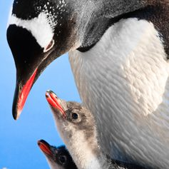 Antarctica photo 12