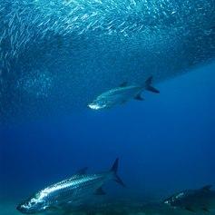 Virgin Islands photo 37