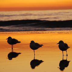 Whitsundays photo 25
