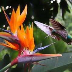 Costa Rica photo 36