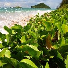 St Lucia photo 17