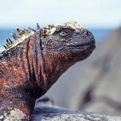 Galapagos Islands photo 29