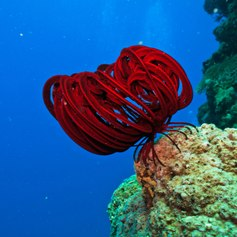 Egypt & Red Sea photo 7