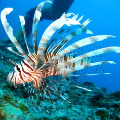 Great Barrier Reef photo 11