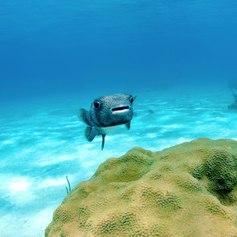 Meet Puffer Fish on an Unforgettable Dive