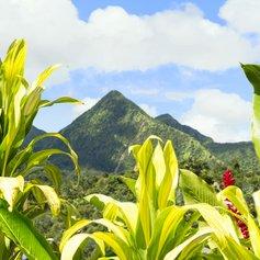 Caribbean photo 35