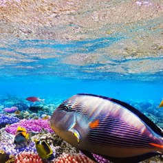 Egypt & Red Sea photo 12
