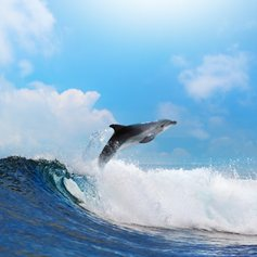 Jumping dolphin throw the wave