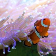 Whitsundays photo 12