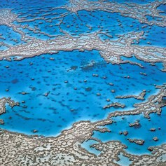 Great Barrier Reef photo 30