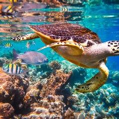 Maldives photo 34