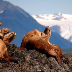 Alaska photo 25