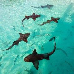 Bahamas photo 28