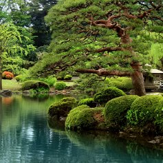 Green paradise in Japan