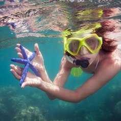 Discover blue starfish in Philippines lagoon