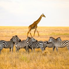 East Africa photo 5