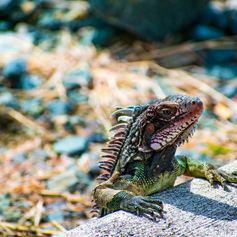 US Virgin Islands photo 35