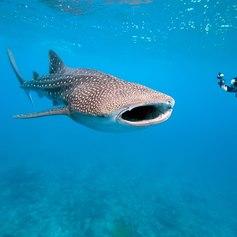Indian Ocean photo 6