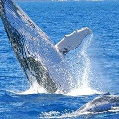 Whitsundays photo 19