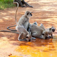 Sri Lanka photo 13