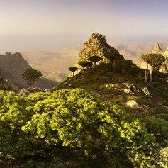 Socotra photo 35