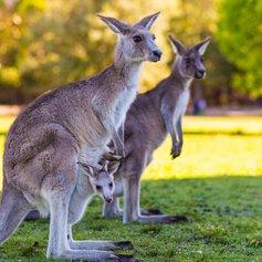 Australia photo 34