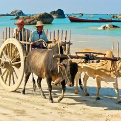 People transporting by a cart with oxen