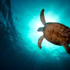 Virgin Islands photo 43