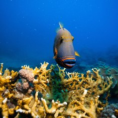 Great Barrier Reef photo 37