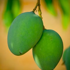 Enjoy Tropical Fruit in the Bahamas