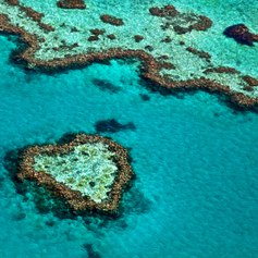Great Barrier Reef photo 5