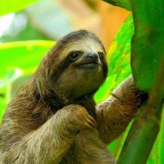 Costa Rica photo 5