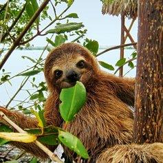 Costa Rica photo 31