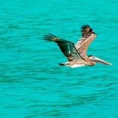 Virgin Islands photo 34