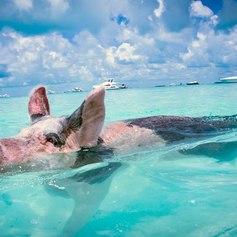 Bahamas photo 30
