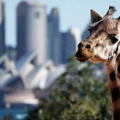 Sydney photo 11