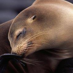 Galapagos Islands photo 5