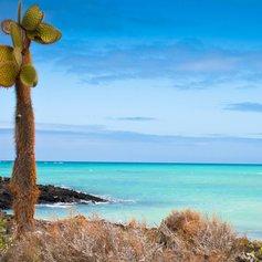 Galapagos Islands photo 17