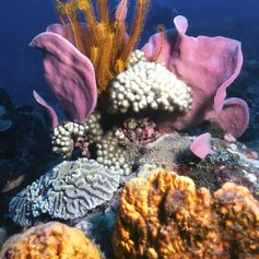 Colourful, reminiscent of a bouquet of flowers coral reef